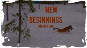 newbeginnings